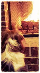 dog looking into a fireplace