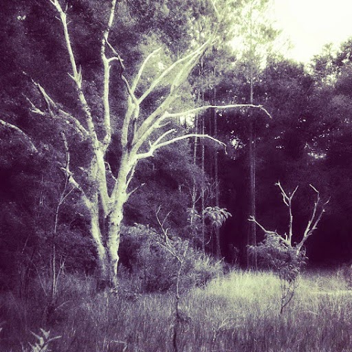 Black and White of barren trees