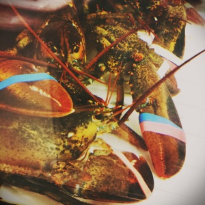 Lobsters in the tank at Publix