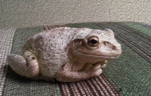 frog sits on a chair