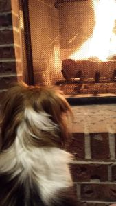 Dog  watching fire in fireplace