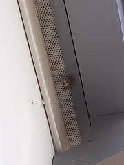 Wasp's nest above the door