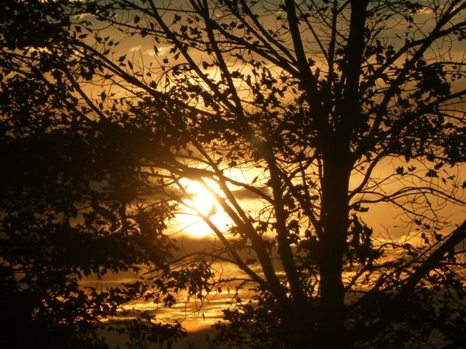 Sunset through the trees