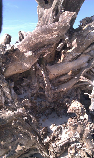 Large piece of driftwood