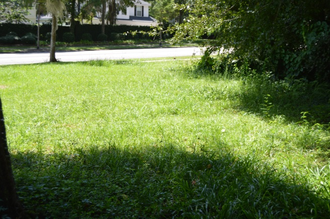 Overgrown, weed infested lawn
