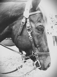 Black and white close up of a Gainesville Police horse