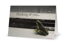 Note card with a photo of a frog sitting by a window with raindrops